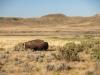 Grassland National Park - Juin 2021